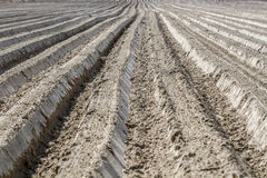 Plowed land. Lines, agricultural land Royalty Free Stock Photo