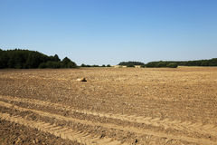 Plowed land, summer. Plowed land in the agricultural field after harvest of cereal, tractor tracks on the ground Stock Image
