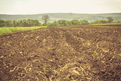Plowed land in the summer Stock Image
