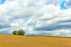 Plowed land to the horizon. Hilly terrain, plowed land to the horizon and a lonely green bush. Beautiful sky with clouds Royalty Free Stock Photo