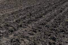 Plowed not sown field. With chernozem Stock Image