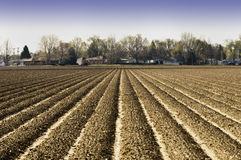Plowed and Planted Royalty Free Stock Photo