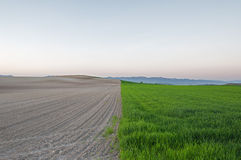 Plowed and planted fields at sunset Stock Photo