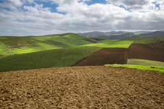 Plowed and planted fields under a blue sky with clouds Stock Photo