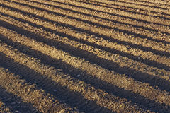 Plowed potatoe field Stock Photography