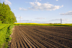 Plowed rapeseed rural agricultural fields blue sky Royalty Free Stock Images