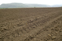 Plowed and ready for sowing agricultural fields. Royalty Free Stock Photography