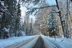 Plowed road through snowy forest Stock Photography