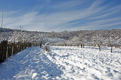 Plowed snow on winter orchard Stock Photography