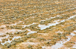 Plowed soil of agricultural Stock Photos