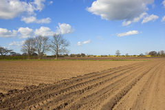 Plowed soil in springtime Stock Image
