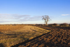 Plowed soil and straw stubble Royalty Free Stock Photography