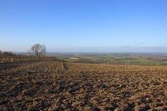 Plowed winter fields Stock Image