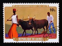 Plowing, Democratic Party of Guinea - 30th anniversary serie, circa 1977. MOSCOW, RUSSIA - AUGUST 29, 2017: A stamp printed in Guinea shows Plowing, Democratic stock images