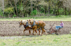 Plowing a field with horses and an old plow Royalty Free Stock Photo