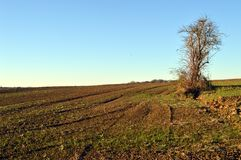 Plowing field with a tree  Stock Photo