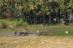Plowing a furrow in  Tamil Nadu Stock Images