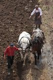 Plowing with horses stock photo