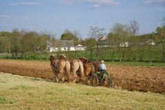 Plowing with horses royalty free stock image