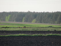 Plowing. NRozpachalys spring plowing work zemli.Dekilka areas already plowed. In the background is seen the pine forest stock image