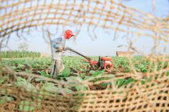 Plowing Tobacco Fields royalty free stock photo