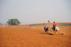 Plowman with oxen on the field Stock Images