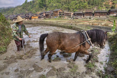 Plowman plowing rice field, using power of horses, near villages Royalty Free Stock Photos