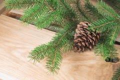 Päls-träd filial med kotten Arkivbild