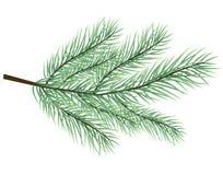 Päls-träd filialvektor Royaltyfri Foto