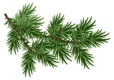 Pälsfodra-treen förgrena sig Grönt fluffigt sörjer filialen Royaltyfri Foto