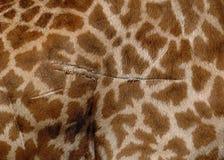 pälsgiraff Royaltyfri Foto