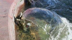 Pluśnięcia woda w miasto fontannie zdjęcie wideo