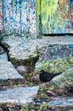 Pluśnięcie ściana Zdjęcie Royalty Free