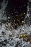 Pluśnięcie woda z czarnymi tło Zdjęcie Royalty Free