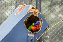?pluchez des perroquets photos stock