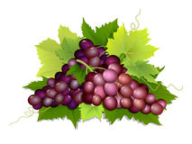 Plucked bunch of grapes Royalty Free Stock Photo