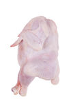 Plucked chicken carcass killed. On a white background Stock Image