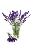 Plucked lavender in glass vase Stock Images