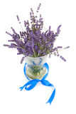 Plucked lavender invase Royalty Free Stock Photo