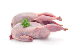 Plucked quails Stock Images