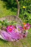 Plucked summerflowers Stock Photos