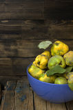 Plucked from the tree quince. Royalty Free Stock Photo