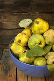 Plucked from the tree quince. Stock Image