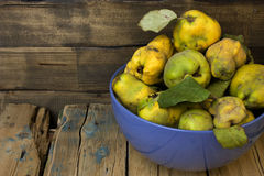 Plucked from the tree quince. Royalty Free Stock Images