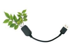 Plugde USBpara o TI verde Fotografia de Stock Royalty Free