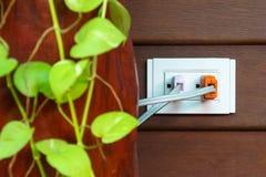 Plug and plant Royalty Free Stock Photos