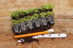 Plug plants stock photos