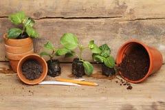 Plug plants and pots Stock Photography