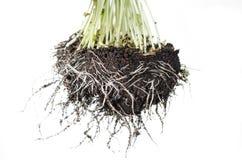 Plug the plants Stock Photography