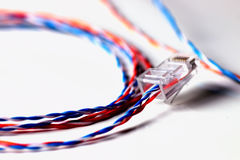 Plug wire color lan. Plug wire different color cable lan on a white Royalty Free Stock Photo